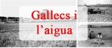 Gallecs